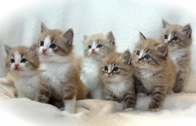 Gambar anak kucing lucu dan menggemaskan