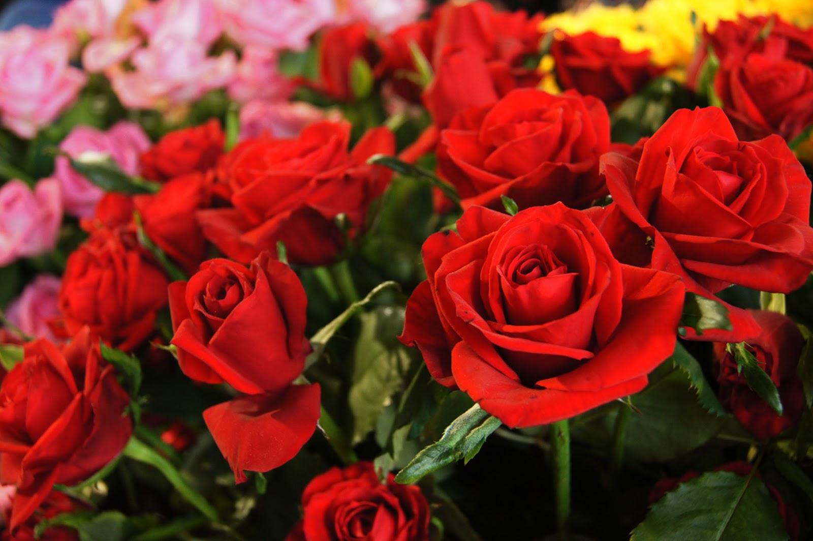 Floral Friday Fotos Fff436 Rosa Olympiad