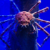 10 Spesies Aneh dan Menakjubkan dari Kepiting Sejati