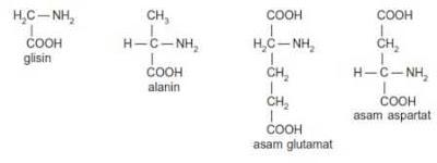 Gugus glisin, alanin, asam glutamat dan asam aspartat yang merupakan asam amino
