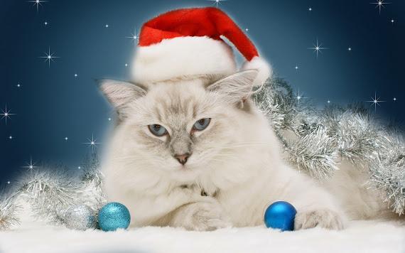 download besplatne pozadine za desktop 2560x1600 slike ecard čestitke blagdani Merry Christmas Božić