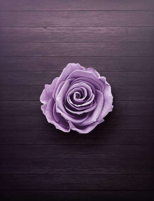 purple rose images