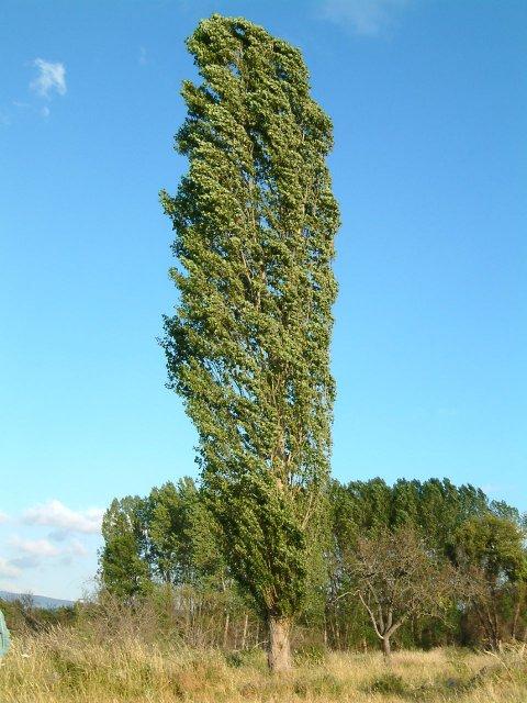 Semana cultural lo m s destacado de la visita al jard n for Diferencia entre arboles de hoja caduca y hoja perenne