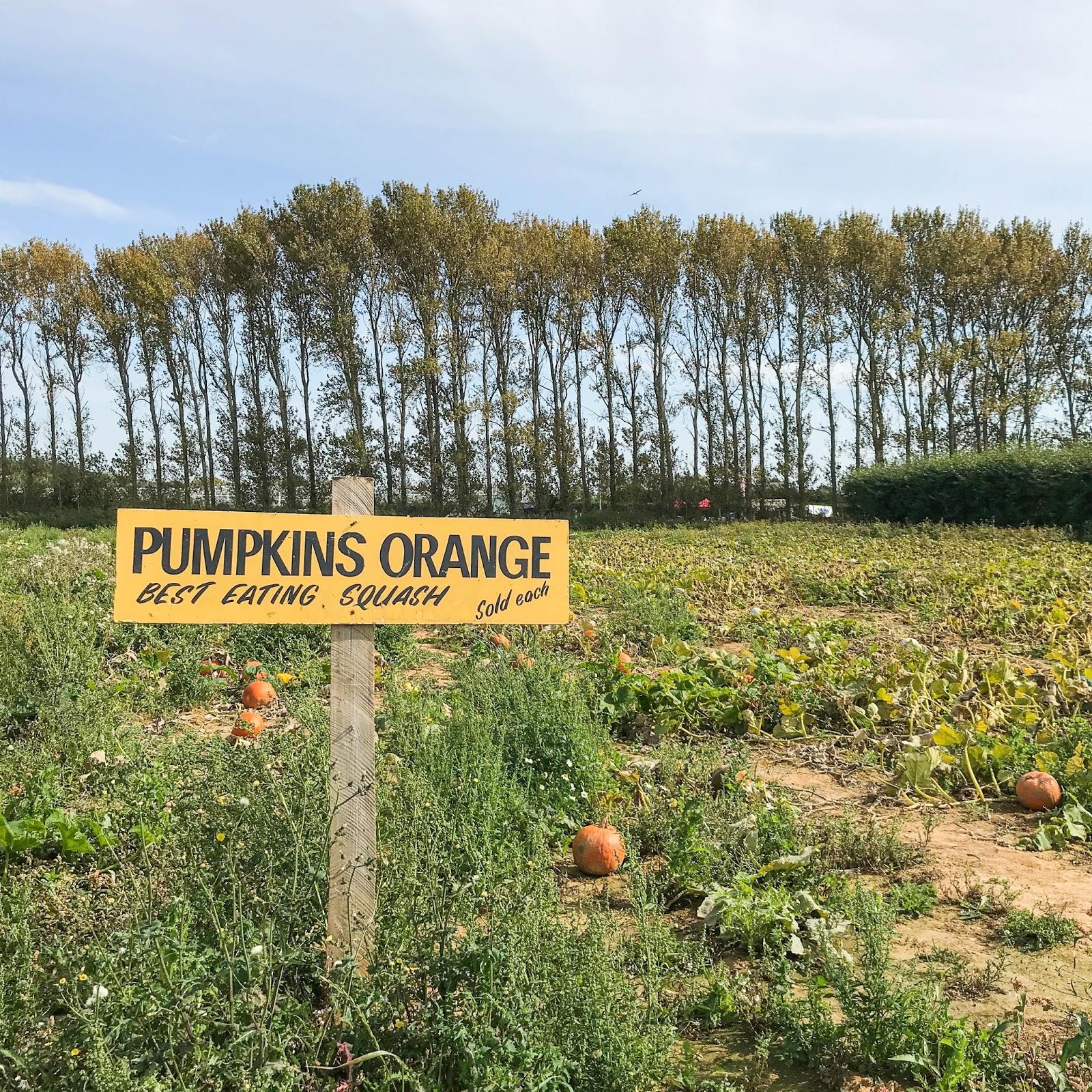 Roundstone PYO Farm