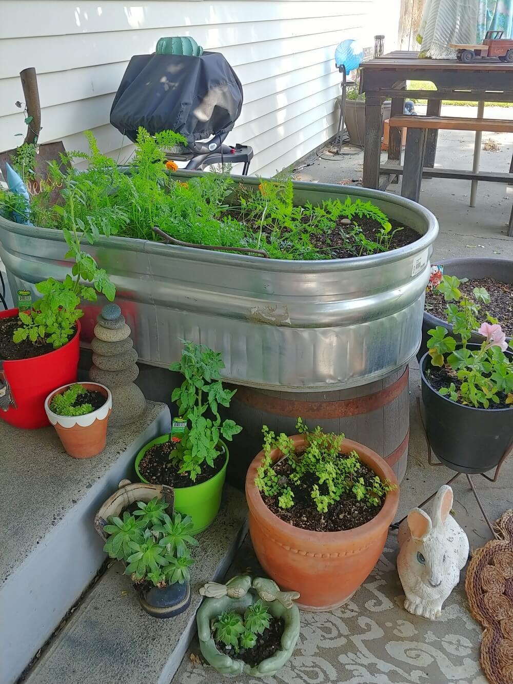 trough raised garden
