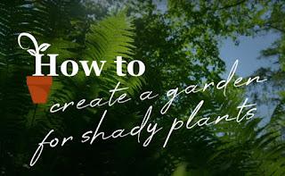 Garden for shade