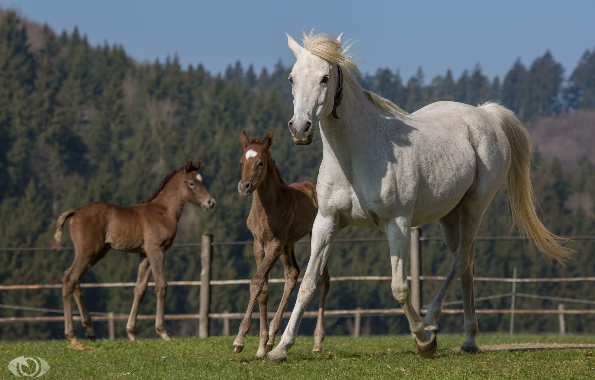 صورة خيول جميلة