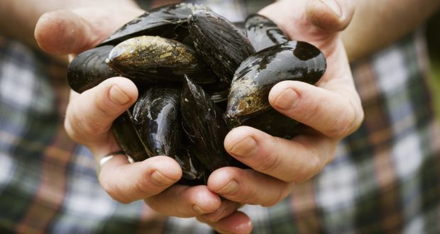 Mussels: 'Super-filters' to Beat Water Pollution