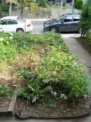 Leslieville Summer Front Garden Cleanup After by Paul Jung Gardening Services--a Toronto Gardening Company
