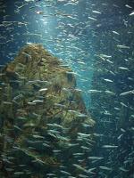 vasca con moltitudine di pesci