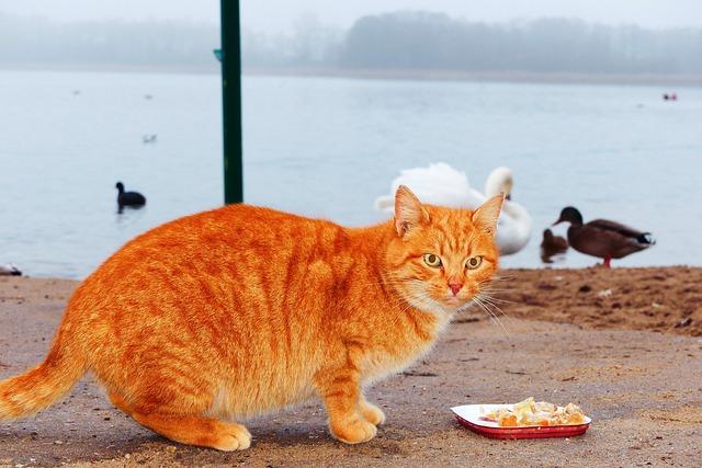 اسعار اكل القطط في مصر