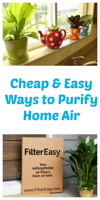 Cheap and Easy Ways to Purify Home Air - 3 Simple Tips