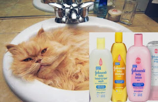 Shampo Manusia yang Cocok untuk Kucing