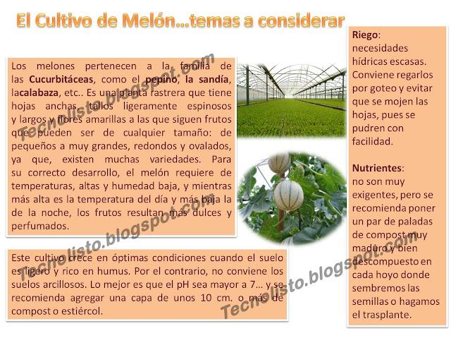 """""""Manual de Cultivo Siembra de Melón1"""""""