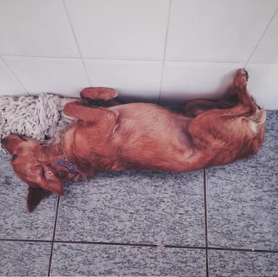 Cachorro fofo para Tumblr