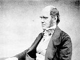 Pendalaman Materi Perkembangan Teori Evolusi Darwin-Bapak Evolusi Dunia