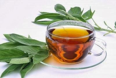 El te de eucalipto sirve para adelgazar