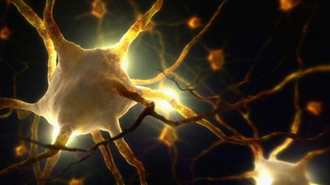 New Pain Sensory Organ in Skin Discovered