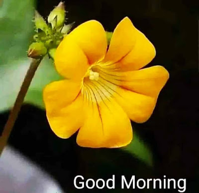 Good Morning Images For Whatsapp