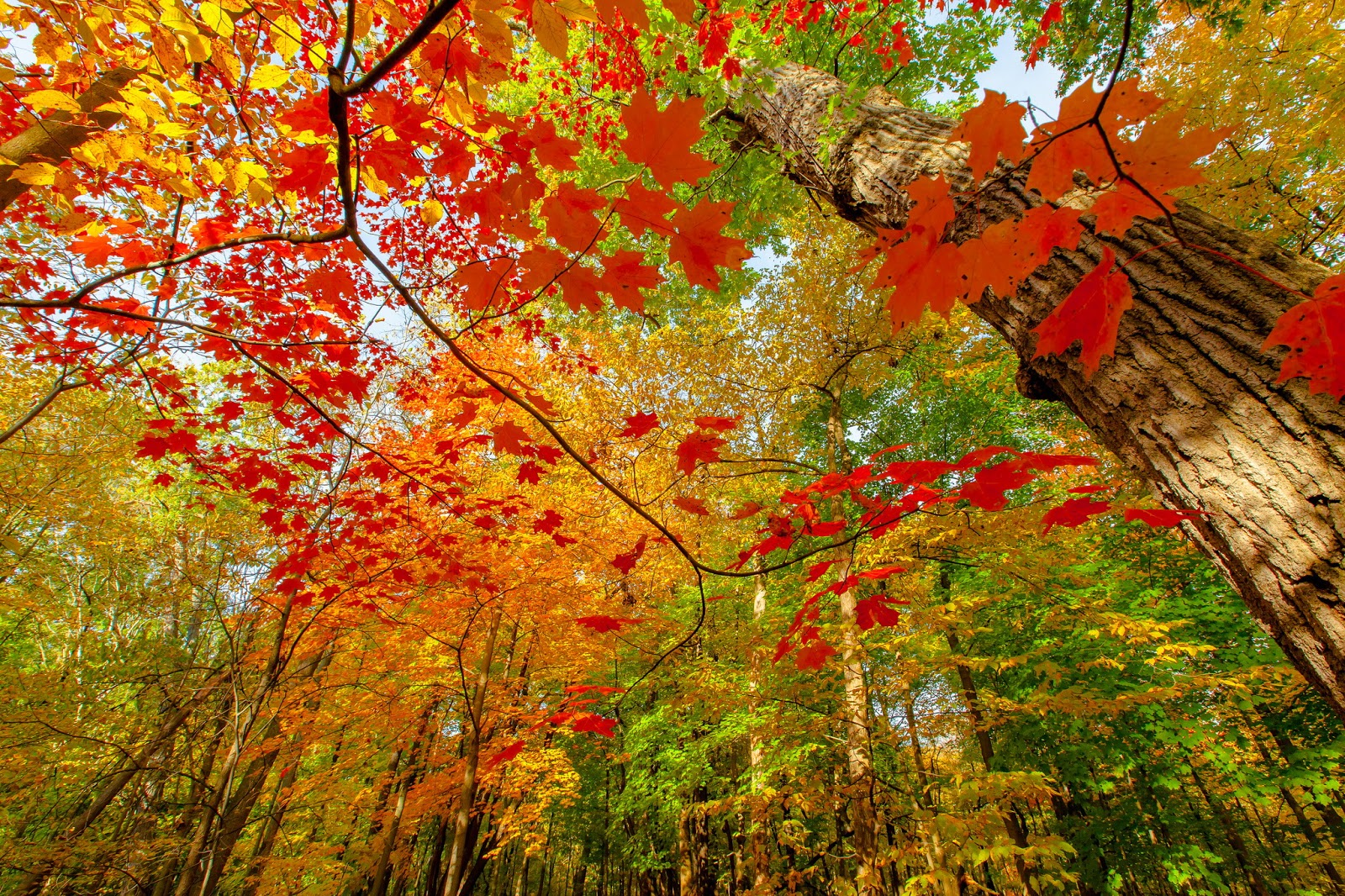 http://1ms.net/colorful-autumn-leaves-249354.html