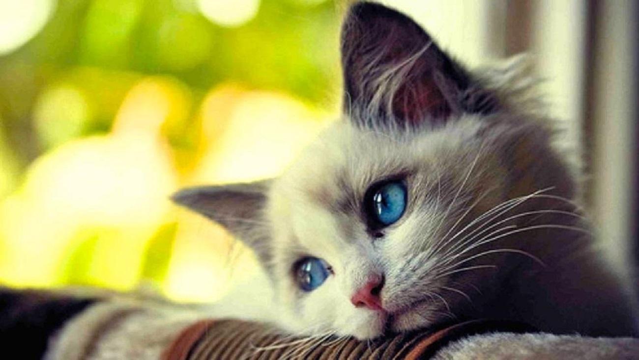 los-gatos-extrañan