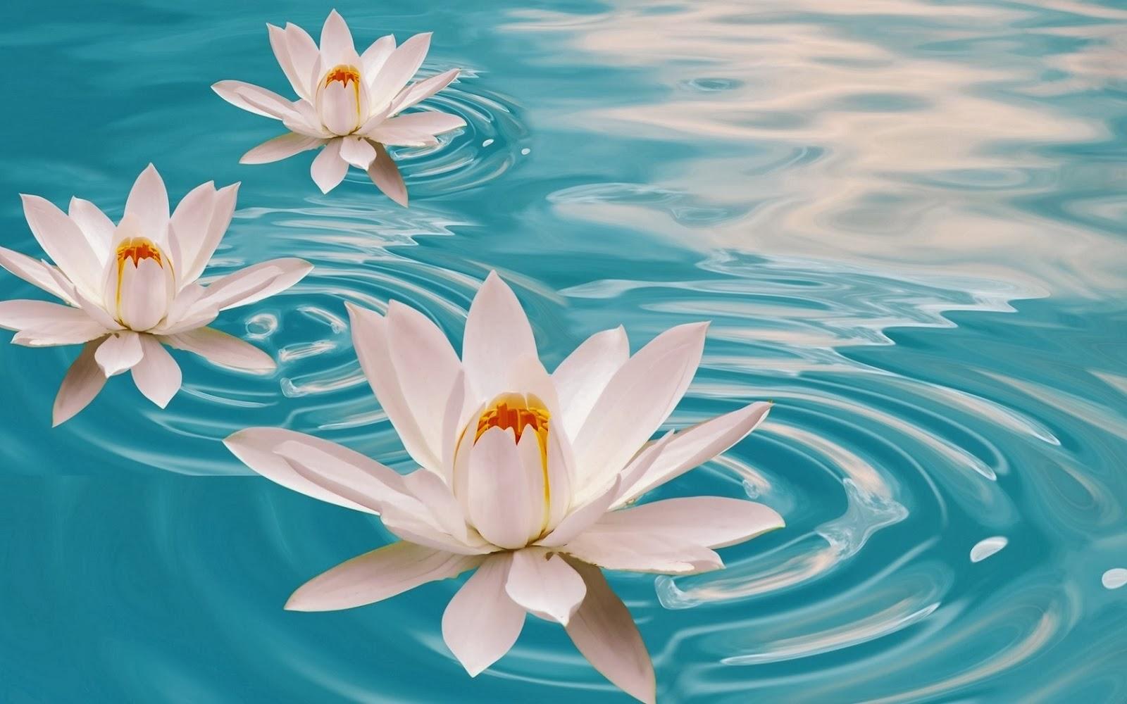 Imagenes Para Facebook De Flores