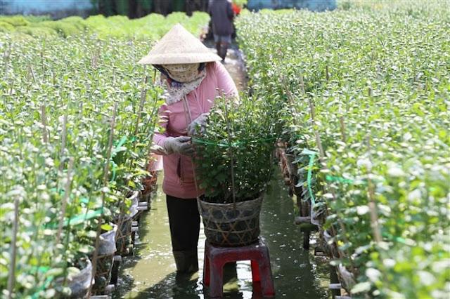 Hình ảnh người nông dân đang chăm sóc hoa