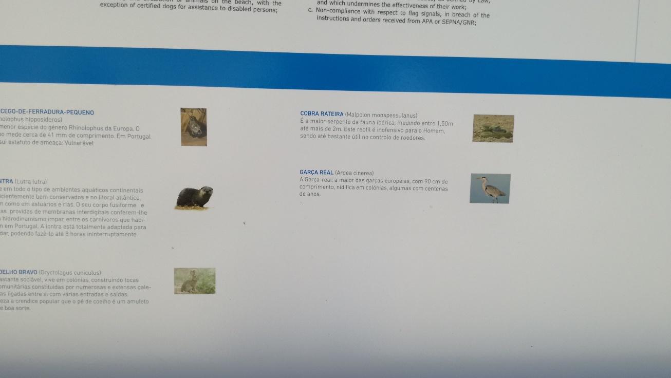Fauna Albufeira Santa Clara
