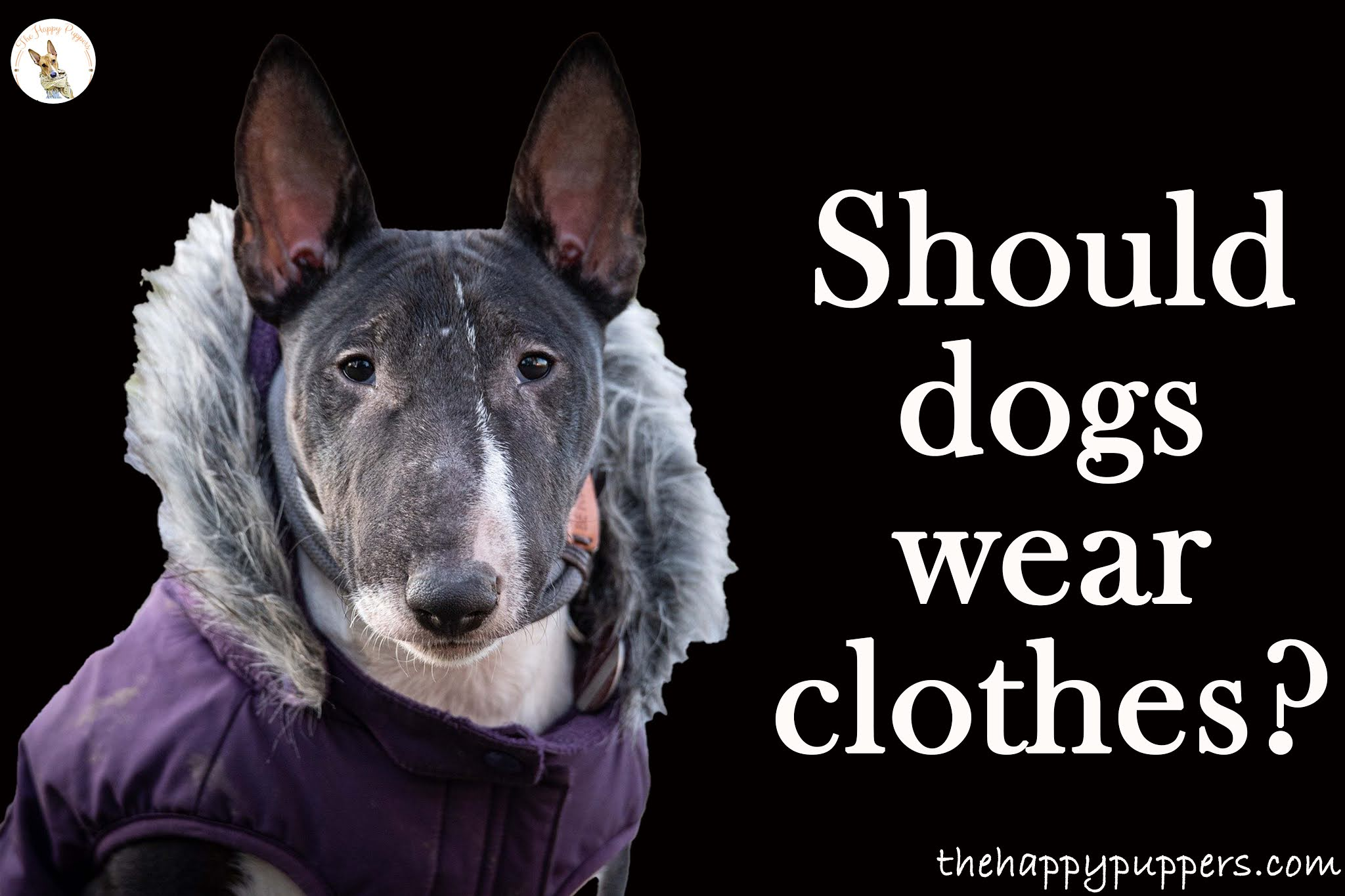 Should dogs wear clothes?