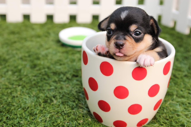 funny photo of cute dog in a bucket