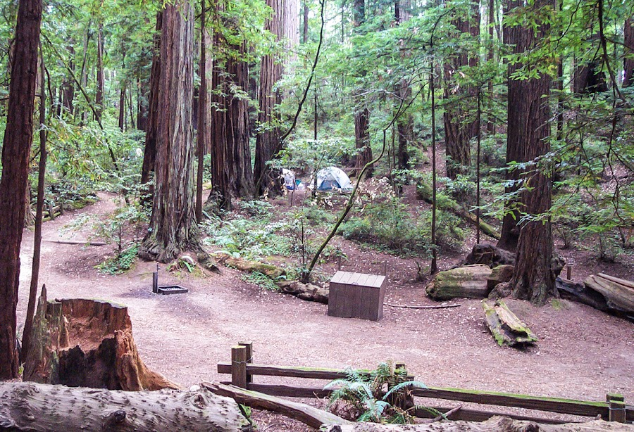 Camping among the redwoods