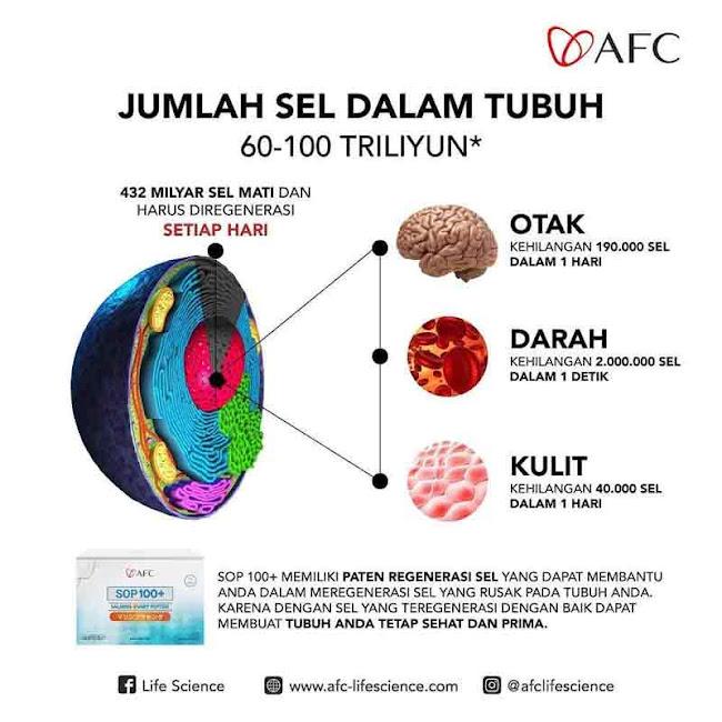 Agen Jual: AFC Salmon SOP 100, SOP 100+ Singapore, di Bandung