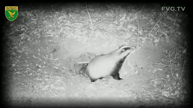 Le avventure del bosco piccolo tasso volpe e compagnia