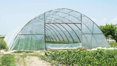 دراسة جدوى فكرة مشروع زراعه الخيار فى الصوب 2020