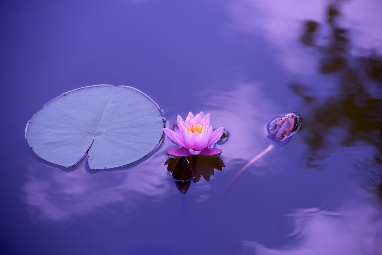 lotus 1552679753