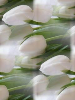 belye-cvety
