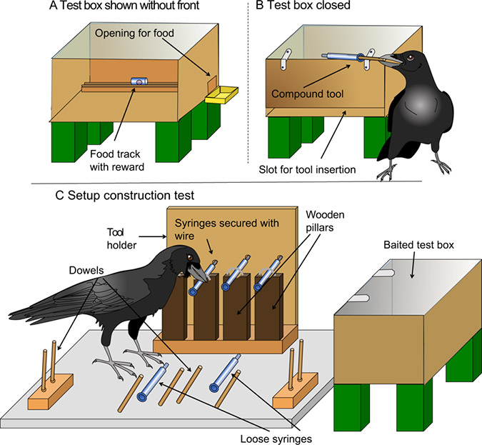 Penelitian Compound Tool Construction by New Caledonian Crows