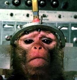 L'orrenda vivisezione