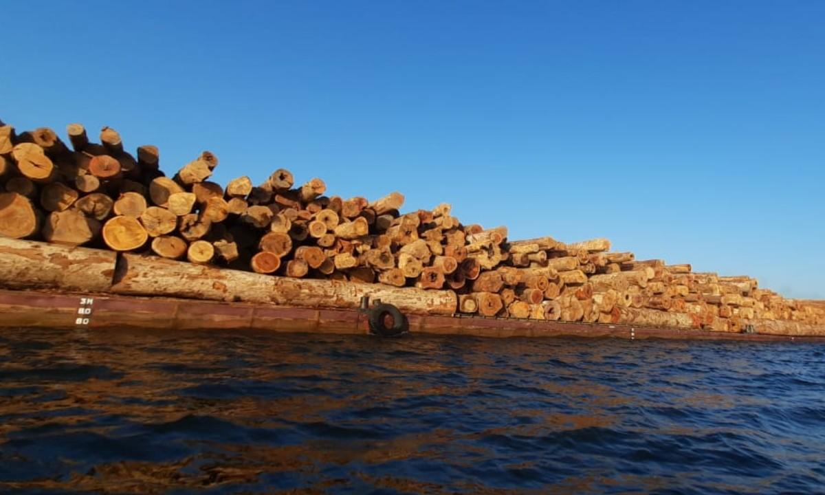 Carta Capital repercute vídeo sobre comboio com toras de madeira no rio Arapiuns