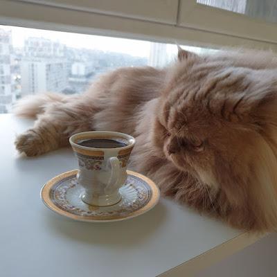 petimce kedi maması