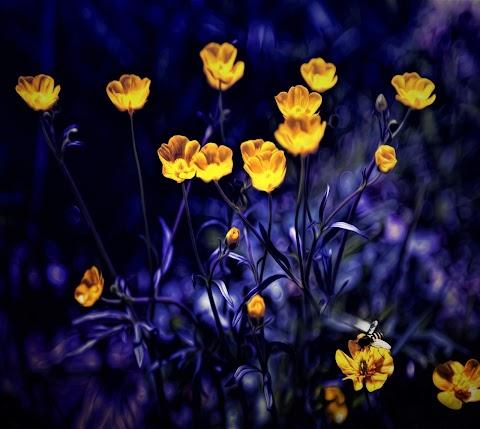 Nụ Hoa Vàng Trên Cỏ
