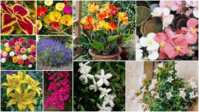 ΚΗΠΟΥΡΙΚΗ: Ποια φυτά καλοκαιρινής ανθοφορίας διατηρούνται για την επόμενη χρονιά
