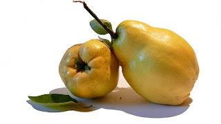 Gutuia Planta Medicinala