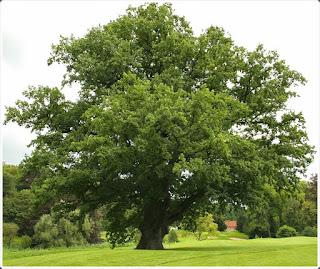 Ağaç Rüyaları