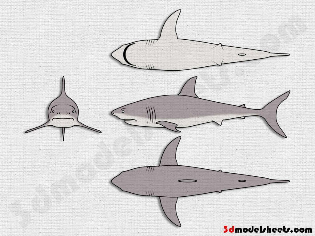 High Resolution Textures Free Animal Blueprints Amp Model Sheets