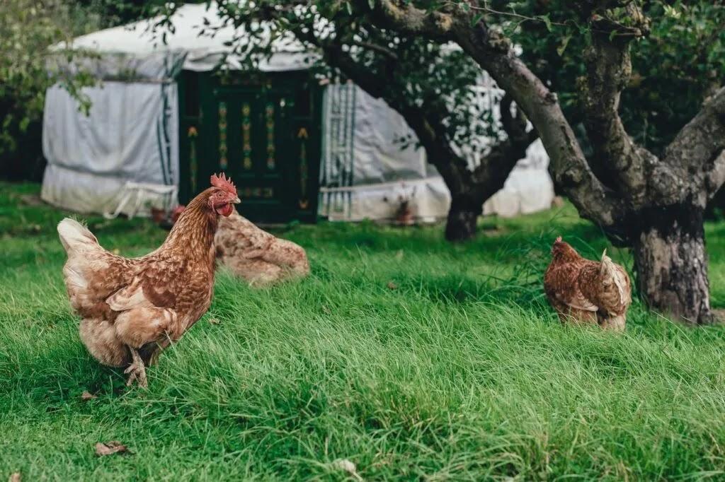 Ο επόμενος στόχος της μασονικής ΕΕ  - Απαγόρευση εκτροφής ζώων σε κλουβιά και κοτέτσια ατομικά