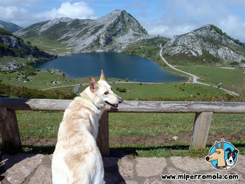 Can de Palleiro en Los Lagos de Covadonga, Asturias con perro