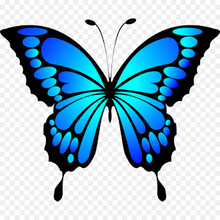 معنى الفراشة في منام العزباء