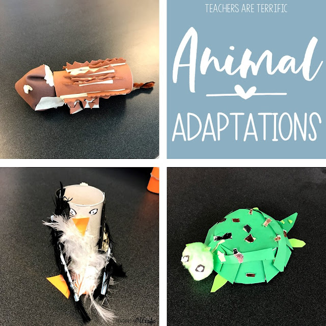 Animal Adaptations Resources Round-Up - Teachers Are ...