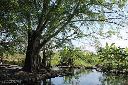 legenda di balik beningnya air di Umbul Manten Klaten
